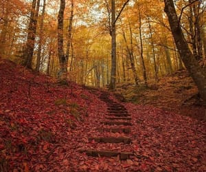 autum, color, and forest image