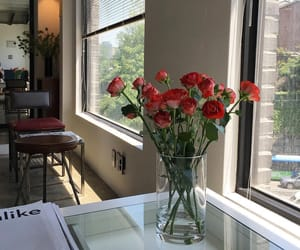 flowers, rose, and room image