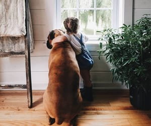 dog, friendships, and friends image