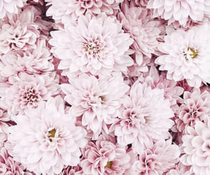 background, basic, and flowers image