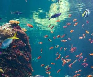 aquario, sea, and fish image