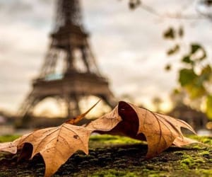 paris, autumn, and leaves image