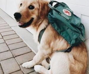 dog, backpack, and kanken image