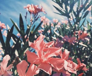 aesthetics, flowers, and pink image