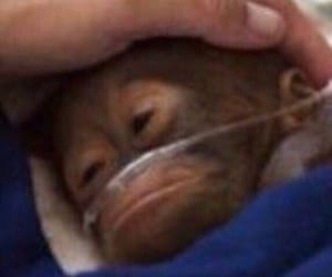 meme, monkey, and cute image
