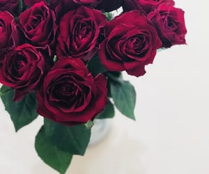 photography, red, and roses image