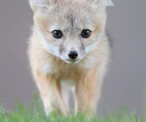 baby animals, cubs, and cute animals image