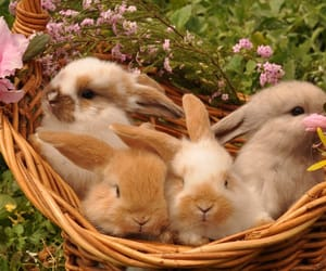 bunny, rabbit, and animals image