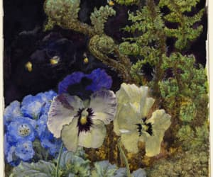 pansies and fern shoots image