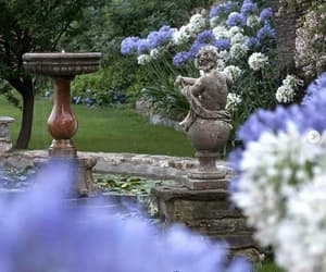 flowers, agapanthus, and alassio image