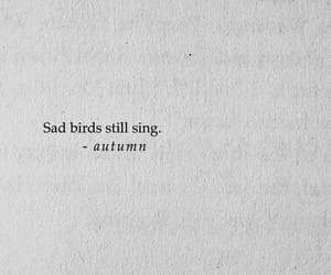 sad, bird, and quotes image