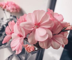 flowers, gray, and pink image