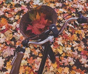 autumn, beautiful, and bicycle image