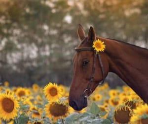 autumn, beautiful, and horse image