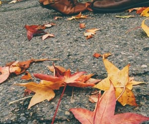 article, autumn, and maroon 5 image