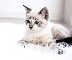 adorable, baby, and animal image