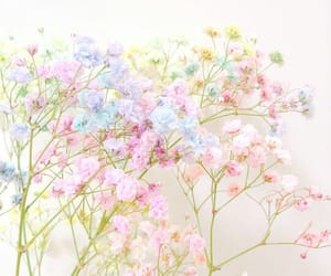 baby's breath, colorful, and dreamy image