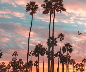 california, palms, and sunset image