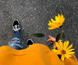 hollister, hoodie, and sunflower image