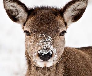 animal, deer, and winter image