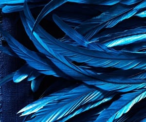 blue, aesthetic, and feathers image