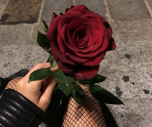 aesthetic, rose, and alternative image