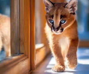 cuccioli, gatto, and occhioni image