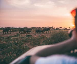 africa, elephants, and travel image