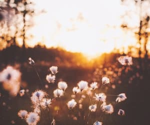 flowers, atardecer, and nature image