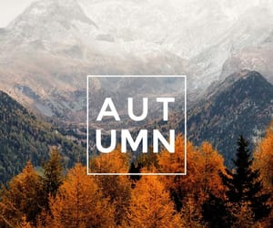 autumn, fall, and wallpaper image