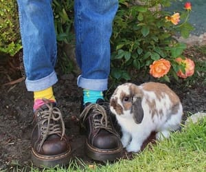 animal, bunny, and fashion image