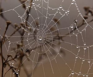 Halloween, spider web, and spiderweb image