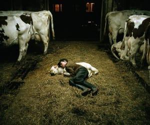 boy, canada, and farm image