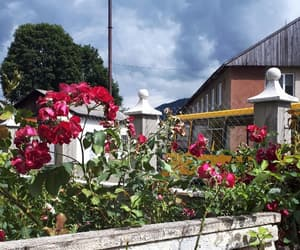 clouds, flowers, and garden image