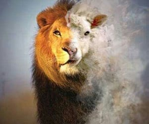 bible, lion, and love image
