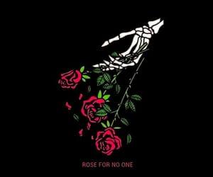 rose, black, and wallpaper image