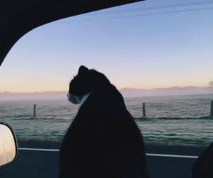 car, trip, and cat image