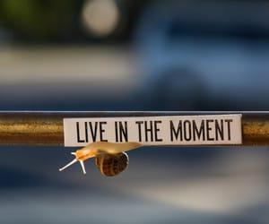 life, macro, and words image
