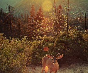 nature, deer, and forest image