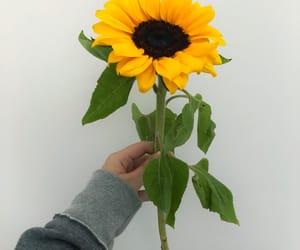 boyfriend, flor, and flower image