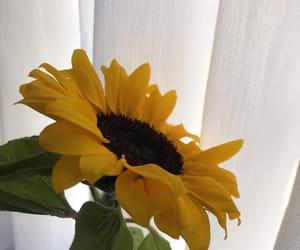flor, wallpaper, and flower image