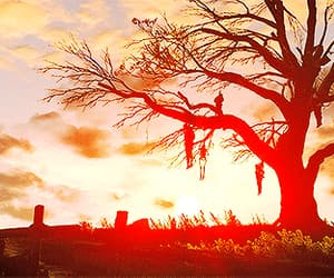 dead, tree, and death image