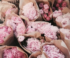 tumblr inspiration, nature aesthetic, and rose gold pink image