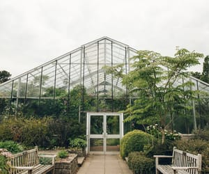 green, green house, and greenhouse image