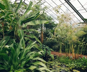 green house, greenhouse, and dundee botanic garden image