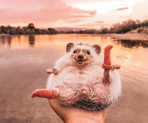 animal, hedgehog, and socks image
