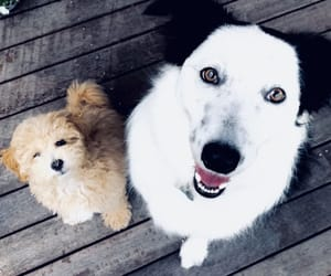 best friend, bff, and friendly image