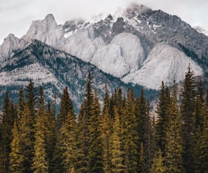 landscape, nature, and trees image