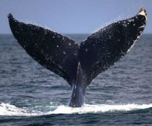 whale and nature image