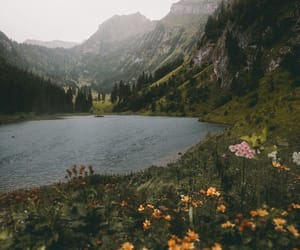 nature, flowers, and lake image